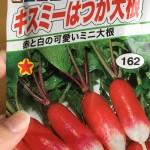 家庭菜園始めました。検証:二十日大根を二十日で収穫できるのか?