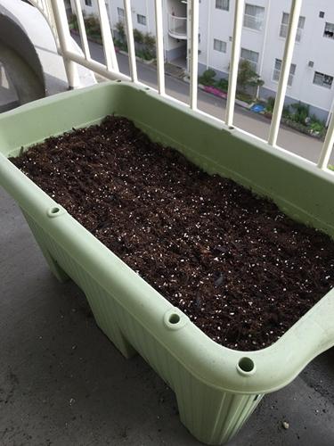 二十日大根の種をまいたプランターの写真