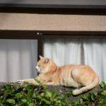 長崎の眠りネコ