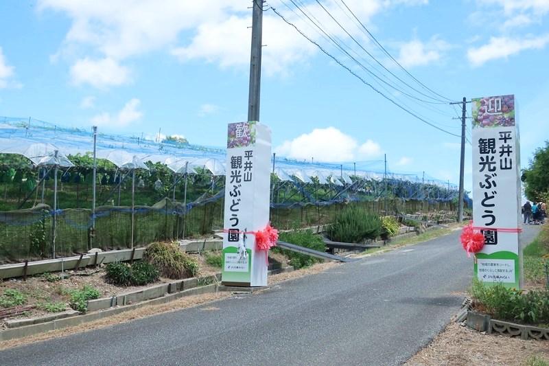 三木平井山観光ぶどう園