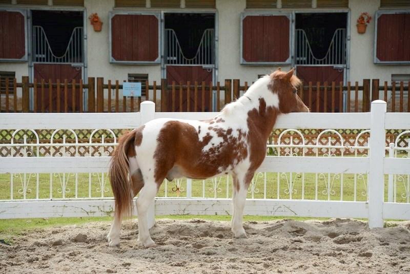 三木ホースランドパークで佇む馬