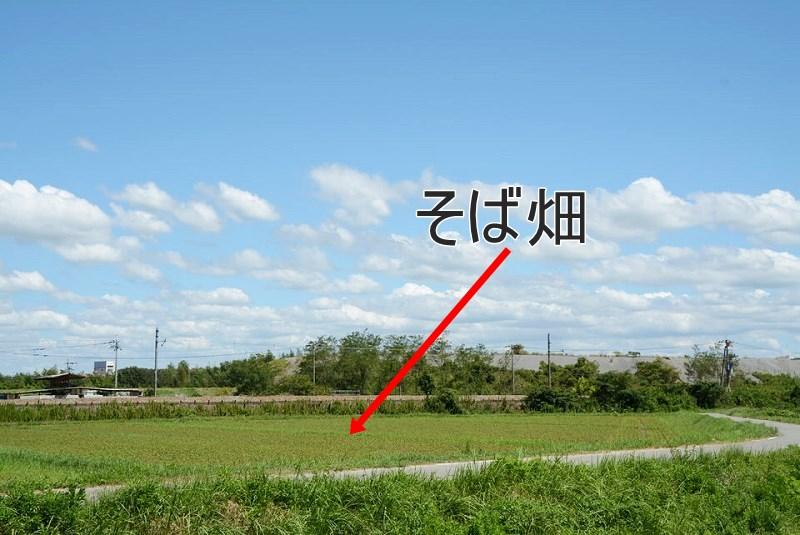 鍬渓温泉きすみのの郷の向かいにあるそば畑