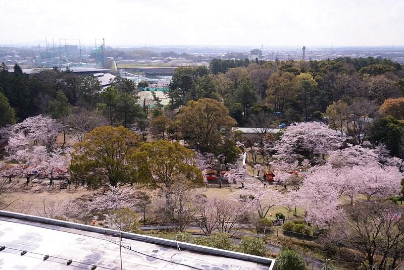 日岡山展望台から見える桜