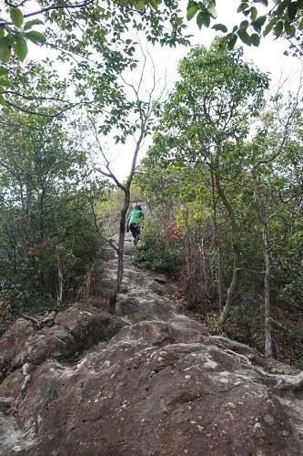 小高御位山へ向う道