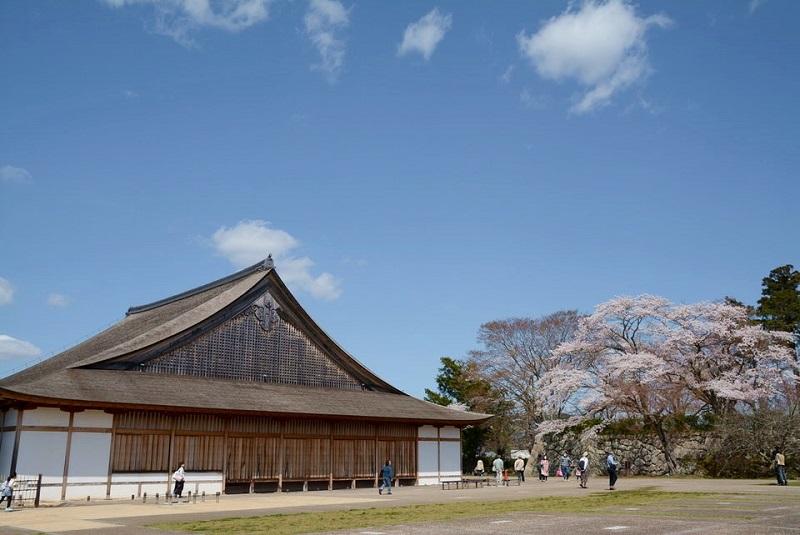 篠山城大書院の隣に咲いている桜