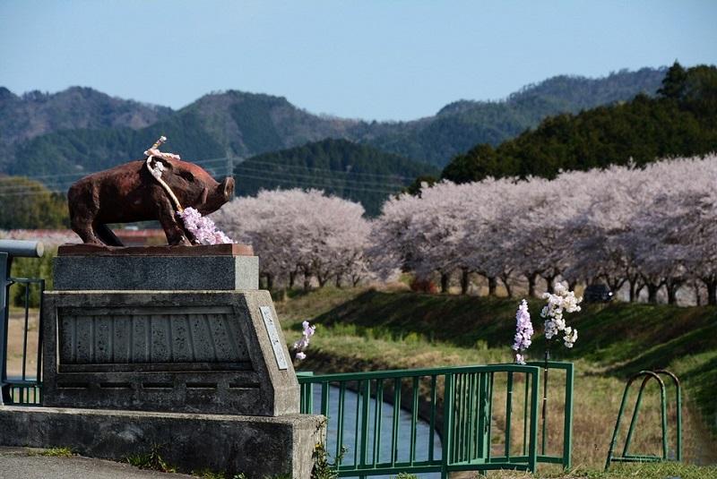 渡瀬橋のイノシシ像と桜