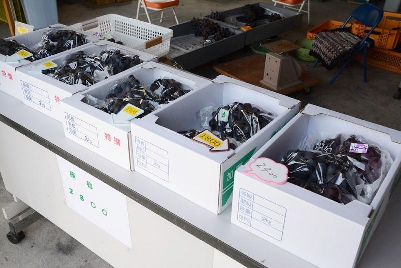 神戸博さんが運営する神戸農園(かんべのうえん)のぶどう