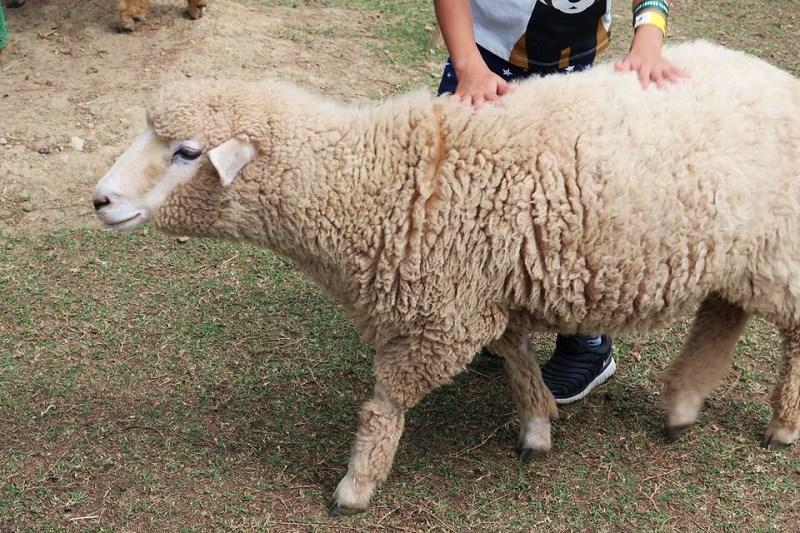ネスタリゾート神戸「アニマル・フレンズ」の羊