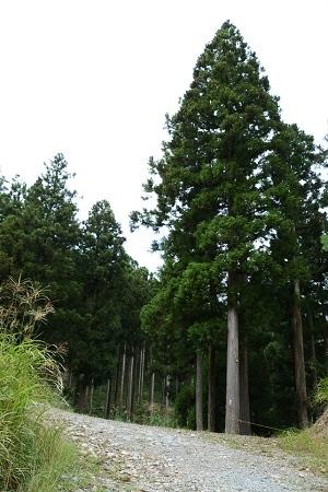 砥峰高原内の林