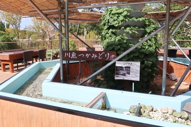 ネスタリゾート神戸ワイルドハーベストのニジマス釣り場