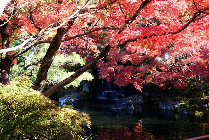 好古園の渡り廊下から見える紅葉と滝