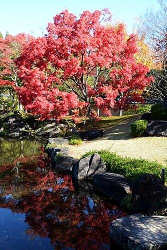 好古園「築山池泉の庭」内の紅葉と池