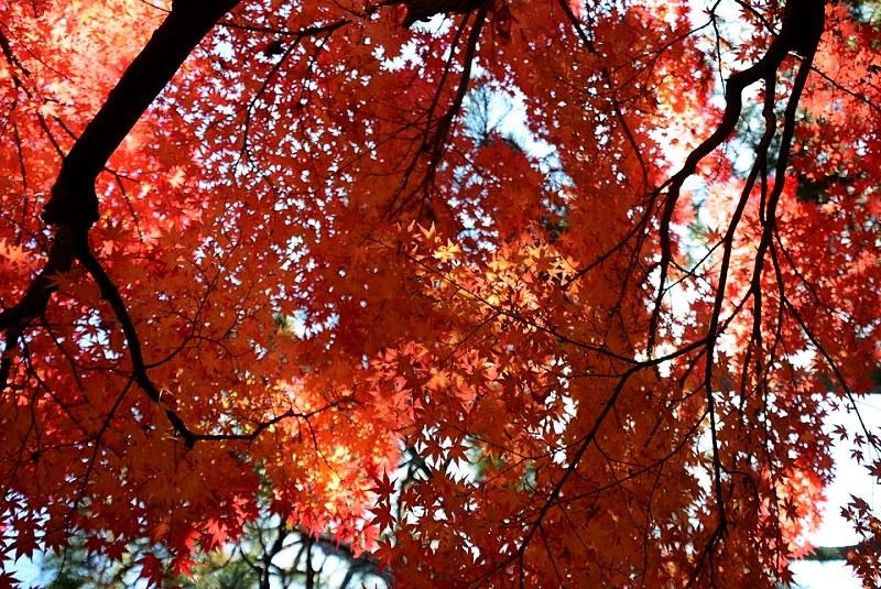 好古園の紅葉と木漏れ日